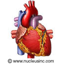 Heart Pic-1