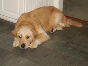 Dog (Image mine)